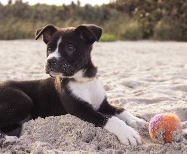 Puppy laying in sand on a beach